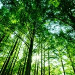夏の樹木のご紹介