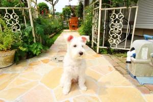 犬と暮らす庭②画像