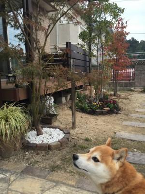 犬と暮らす庭画像