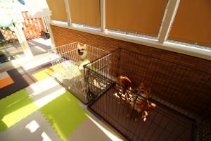 犬と暮らす庭③画像
