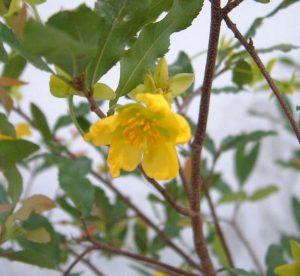 ミッキーマウスツリー花