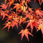 秋の風物詩
