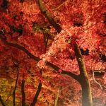美しく色づく広島の名所へ