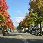 街路樹の役割
