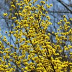 待ち遠しい花の季節