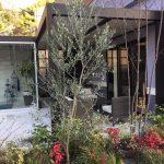 お庭にオススメ シンボルツリー