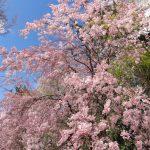 待ち遠しい春