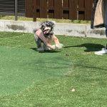 人工芝の魅力