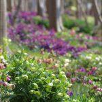 寂しい季節にお庭を彩る美しいお花