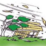 庭木の台風対策