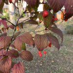 秋にかわいい実をつける植物