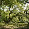 悠久の時を刻む広島の巨木・大樹