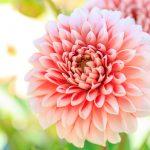 秋のガーデニング おススメの花