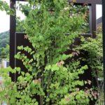 かわいい葉っぱの木