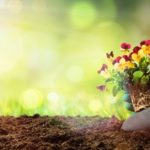 お花の肥料のお話
