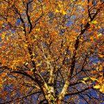 ほんのりと秋の準備