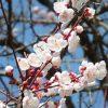 寒かった冬を乗り越え、春はすぐそこに。