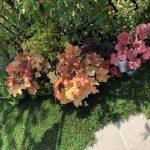 庭の一角を華やかにしてくれるカラーリーフ