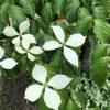 風に揺れる白い花