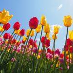 春の花でお庭を彩る