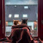 雨の日にも心地よい空間を。