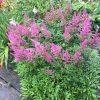 色とりどりの季節のお花