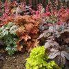 多彩な葉色でお庭を鮮やかに!!