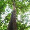 天然木のやさしいスロープ