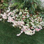 色鮮やかなグランドカバーでお庭を華やかに!!