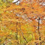 紅葉が美しい雑木樹木