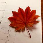四季の変化を感じられる紅葉。