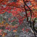 お庭に手頃な紅葉樹木はいかがですか?