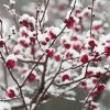早春を告げる縁起樹木