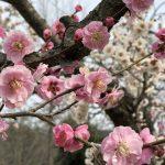 気分をアゲてくれる春の花✿