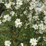 春風に揺れる花