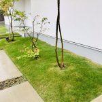 緑たっぷりのお庭のお手入れ