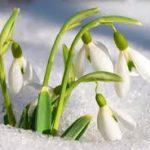 冬を越す可憐な花✿