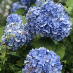 初夏から夏へつなぐ花