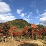 鮮やかな秋の風景
