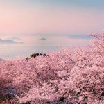桜色に染まる季節