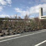 春の植木大市