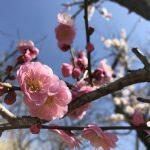 春のお便り✿