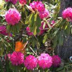 心ときめく春のお花✿