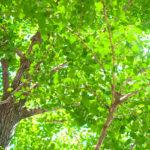 夏に花を咲かせる樹木